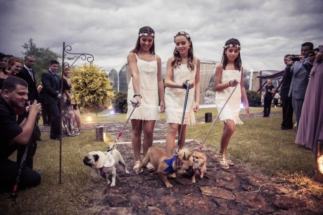Daminhas e cachorros
